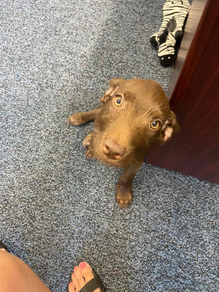 When you stop at Rumsey Sustar Insurance and meet the new team member, Whiskey