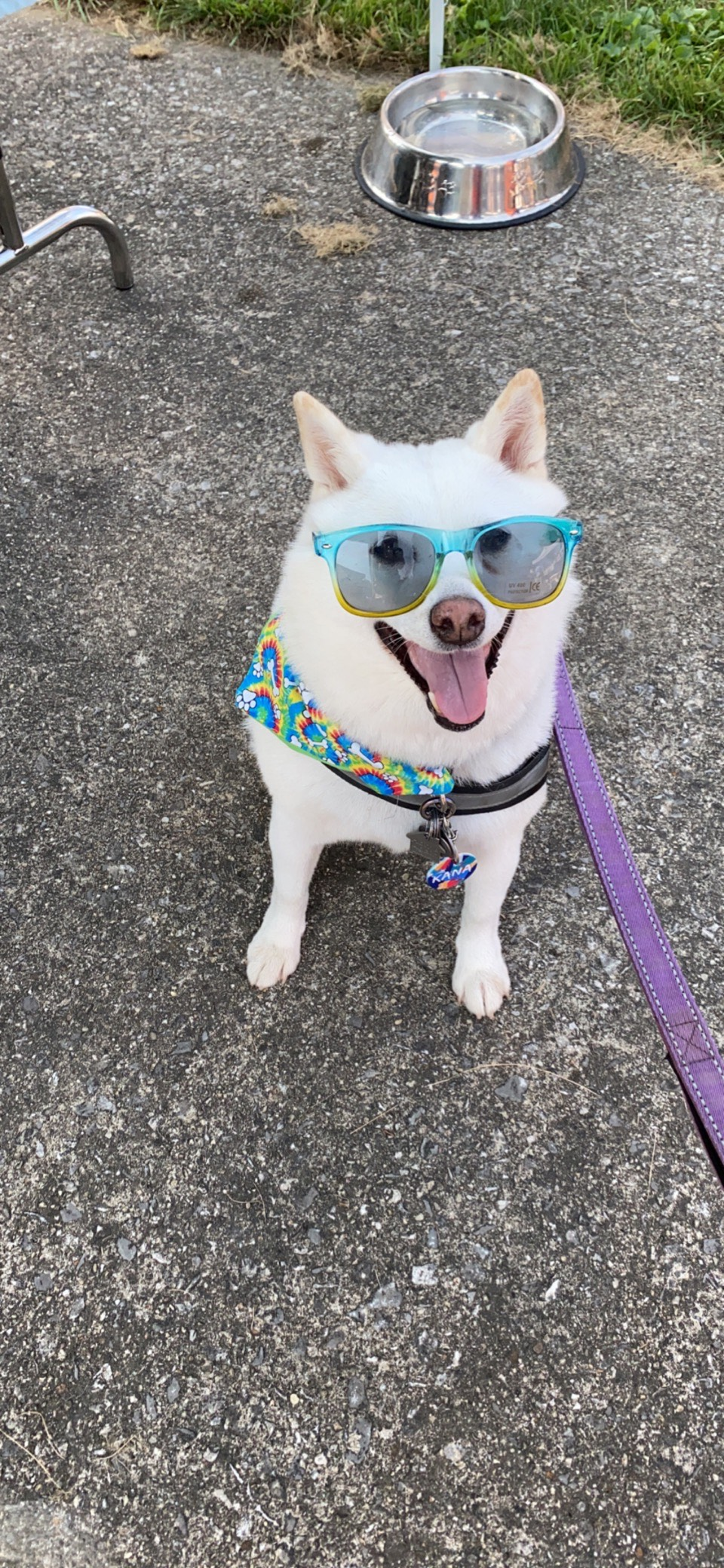 Woofstock 2021 was AWESOME! This Brand Ambassador was petting ALL the dogs, passing out safety stickers, and signing attendees up for a chance to win a free grooming for Aussie Pet Mobile Cuyahoga Valley. Great job Rescue Village for putting together a pawsitively perfect event!
